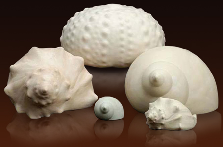 Ceramic sea shell urns
